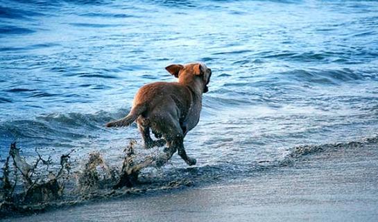 Il Cane che fugge...