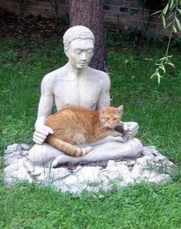 Buddha_gatto
