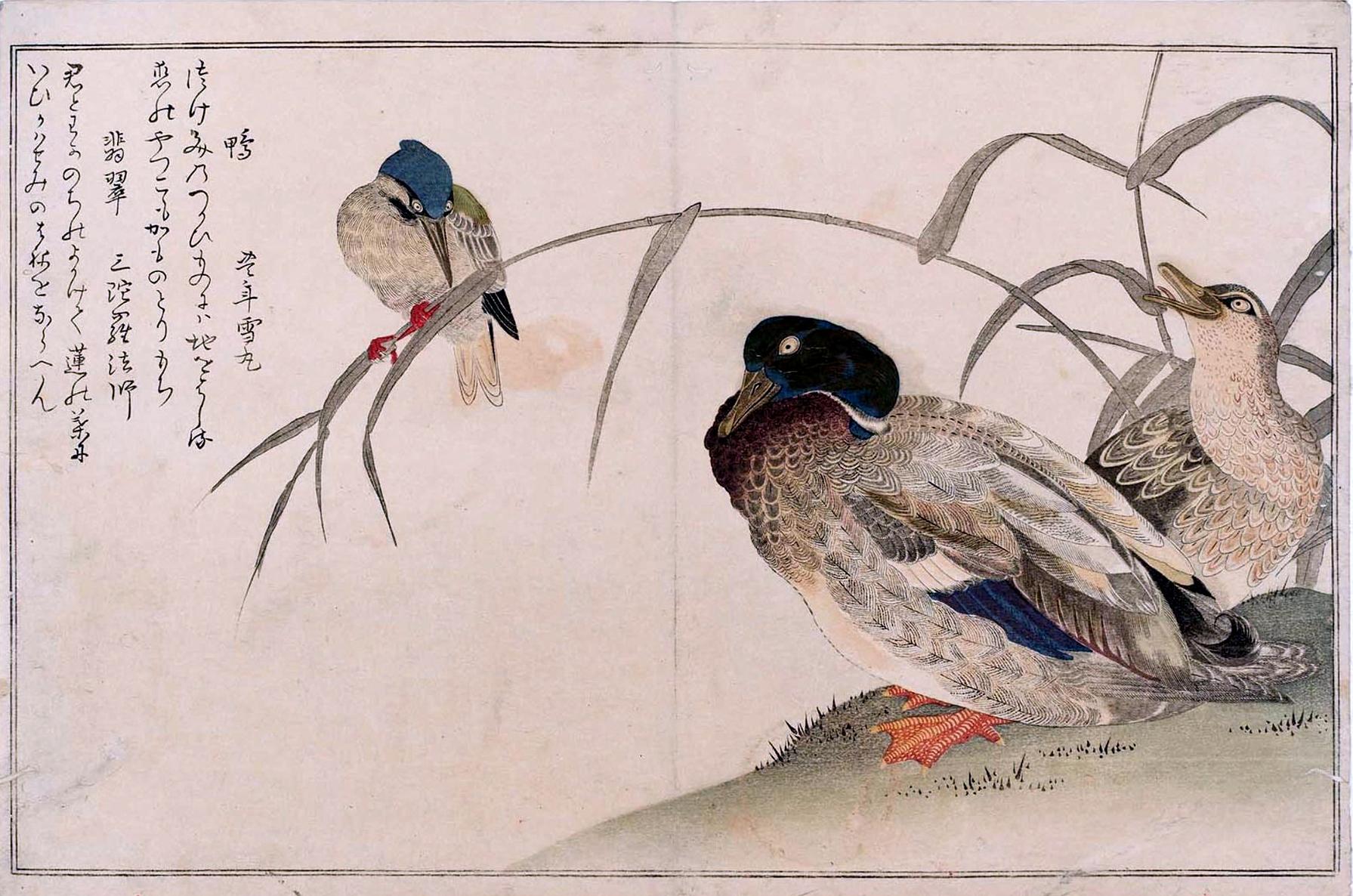 Hiroshige - L'Anatra